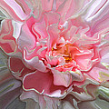 Dynamic Florals #21 by John Stuart Webbstock