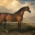 Eagle - A Celebrated Stallion by Mountain Dreams