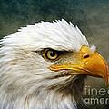 Eagle Art by Steve McKinzie