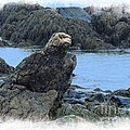 Eagle At Rest by Marcia Lee Jones