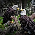 Eagle Couple by Cheryl Cencich