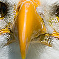 Eagle Eyes by Les Palenik