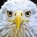 Eagle Eyes by Peg Runyan