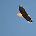 Eagle Flight 2 by Bonfire Photography