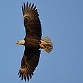 Eagle Flight 4 by Bonfire Photography