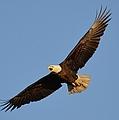 Eagle Flight 5 by Bonfire Photography