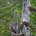 Eagle Gang by Heather Coen