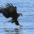 Eagle Grab by Coby Cooper