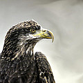 Eagle In The Mist by John Straton