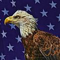 Eagle In The Starz by Deborah Benoit