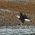 Eagle Juneau Ak by Cindy Murphy - NightVisions