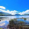 Eagle Lake In Acadia by Elizabeth Dow
