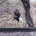 Eagle Landing 2 by M Dale