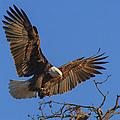 Eagle Landing by Beth Sargent