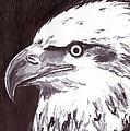 Eagle by Michael Rados