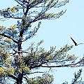 Eagle Nest by Thomas Phillips