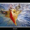 Eagle Oorah by Donna Proctor