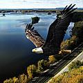Eagle Over Mississippi  by Randall Branham