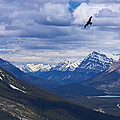 Eagle Over Peyto Lake by Stuart Litoff
