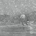 Eagle Over Water by Raine Cook