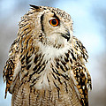Eagle Owl by Jan Brons