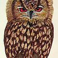 Eagle Owl by Nicole I Hamilton