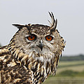 Eagle Owl by Simon Gregory