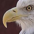 Eagle Portrait Freehand by Ernie Echols