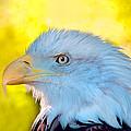 Eagle Profile by Boyd  E Van der Laan