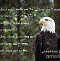 Eagle Scripture Isaiah by Jill Lang