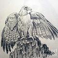 Eagle Sketch by Prashanti Nekkanti