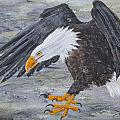 Eagle Study 2 by Dee Carpenter
