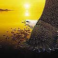 Eagle Sunset by Joseph LaPlaca