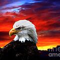 Eagle Sunset by Nick Gustafson