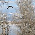 Eagle Takes Flight by Jesse Woodward