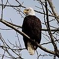 Eagle by Thomas Higgins