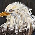 Eagle by Victoria  Sanchez