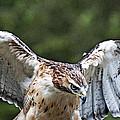 Eagle Wings by Bill Howard