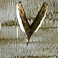 Eagle Wings by Marcia Lee Jones