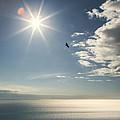 Eagles And The Sea by Michele Cornelius