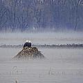 Eagles On Foggy Morning by Alan Hutchins