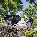 Eaglet Discipline by Jack R Perry