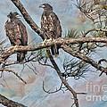 Eaglets In Oil by Deborah Benoit