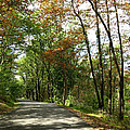 Early Autumn Drive by Jean Macaluso