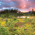 Early Autumn Meadow Sunset At Mt Baker by Eti Reid