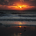 Early Bird by  Island Sunrise and Sunsets Pieter Jordaan