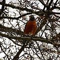 Early Bird by Susan Herber