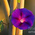 Early Bloomer by Joe Geraci