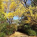 Early Fall 1 by Pema Hou