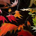 Early Fall by Ian  MacDonald
